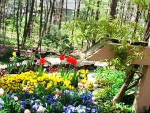 Terraces of Tulips4--4-15- 12