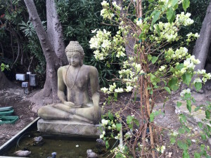 Buddha Meditating by Pond
