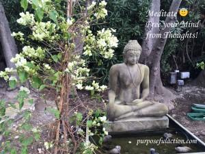 Meditate Free UR Mind Buddha PA