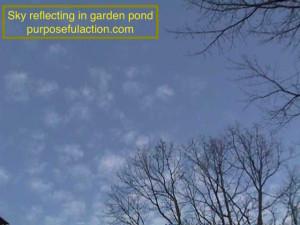 Sky in Pond MVC-056S